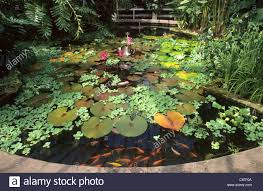 Botanical Garden Birmingham Birmingham Botanical Gardens Pond In Glass House Ponds