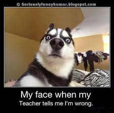 Funny Dog Face Meme - funny dog face my face when my teacher tells me i am wrong