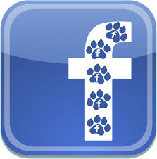 fido and tiger pet sitting services and rates