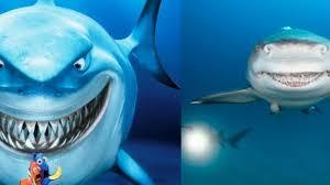 Film Kartun Ikan Hiu   wow fotografer foto hiu asli yang mirip tokoh bruce di film finding