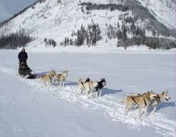 dog sledding lake louise ski area lake louise alberta canada