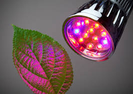 light bulbs that mimic sunlight mimicking sunlight for plant growth being here