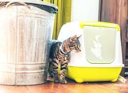 repulsif canapé repulsif interieur canape les racpulsifs pour chats interieur