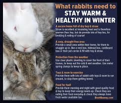 Cool Pets Rabbit Hutch Basic Rabbit Care Here U0027s What You Need To Do Meat Rabbits