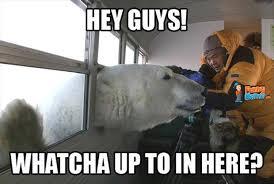 Funny Bear Meme - polar bear funny quotes quotesgram amuses me pinterest memes
