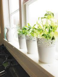 Kitchen Herb Pots Five Kinds Of Happy June 2013