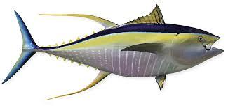 fishmount gallery saltwater fishmounts freshwater fishmounts