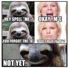 Funny Sloths Memes - 75 best inappropriately hilarious sloth images on pinterest sloth