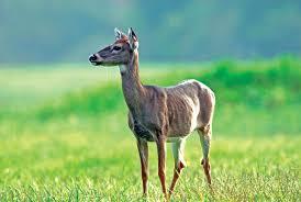 u0026 160 u0026 160 u0026 160 u0026 160 wildlife diseases pennsylvania hunting