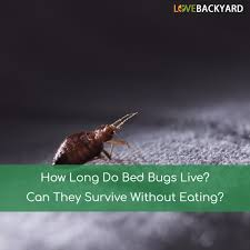 How Often Do Bed Bugs Reproduce How Long Do Bed Bugs Live Can They Survive Without Eating Last