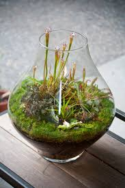knotted driftwood air plant terrarium as small favor and larger