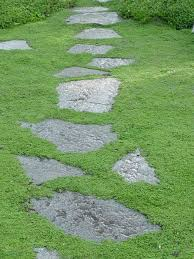 alternatives to grass in backyard which plants to use as lawn alternative diy