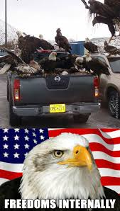 Murica Memes - murica memes 28 images because murica funny murica related