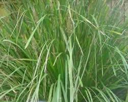 garden design garden design with pictures of ornamental grasses