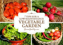 7 tips for a low maintenance vegetable garden