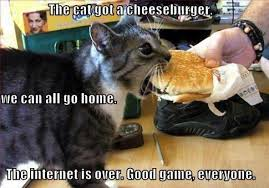 Hamburger Memes - pack up everyone wait nevermind it s just a hamburger cats