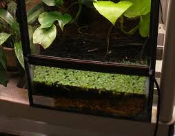 amphibian care u003e u003e terrarium and vivarium maintenance