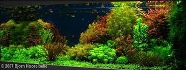 Aquascape Environmental 19 Best Aquascaping Images On Pinterest Aquascaping Aquarium