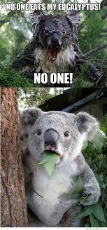 Angry Koala Meme - no one eats my eucalyptus let s get silly pinterest animal