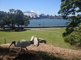 Botanical Garden Sydney by 81 Best Royal Botanical Garden Sydney Nsw Australia Images On