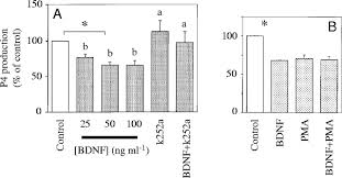 expression and function of brain derived neurotrophin factor and
