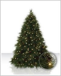 ponderosa needle pine trees tree market