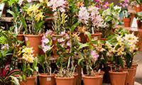Indoor Fragrant Plants - fragrant indoor garden nybg ed