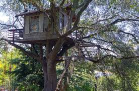 three house a modern tree house in a 100 year oak a place to