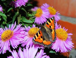 free images nature blossom wing plant flower bloom animal