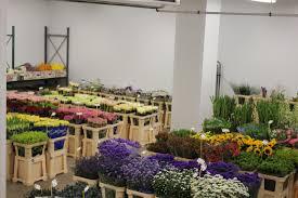 Flowers Glasgow - trade flowers in glasgow james taylor flowers