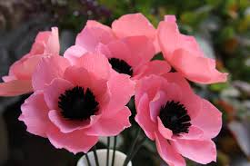 anemones flowers items similar to crepe paper flowers pink anemone flowers on etsy