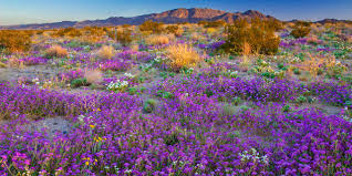 where to find california u0027s best wildflowers during spring 2017
