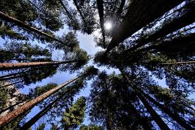 California forest images 10 most haunted forests in california jpg