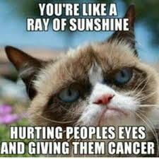 21 Of The Best Grumpy - the 21 best grumpy cat memes and quotes about love and life