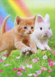 kitten and bunny friends funny cat birthday card by avanti press