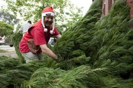 buy christmas tree buy a christmas tree oxfam australia