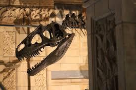 a dinosaur reading list for everyone u2013 phenomena