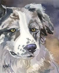 petz 5 australian shepherd 513 best aussie l ve images on pinterest animals aussie