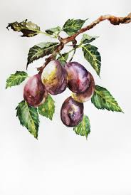 Pirate Decor For Home Original Watercolor Painting Plums Watercolor Plum Art Decor For