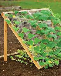 how to grow cucumbers my raised bed vegetable garden