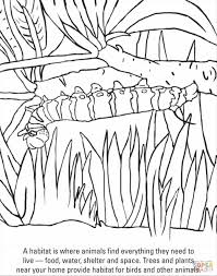 caterpillar to butterfly coloring page geborneo club geborneo club