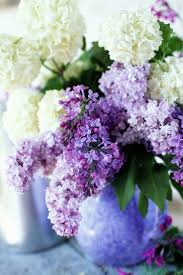 340 best lilac images on pinterest flowers lilacs and lilac flowers