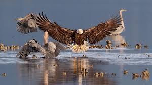 the 2016 audubon photography awards winners audubon