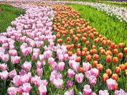 Names And Images Of Flowers - perennial flowers image gallery howstuffworks