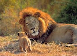 imagenes de animales y cosas top 10 acerca de cosas que no sabias de los animales