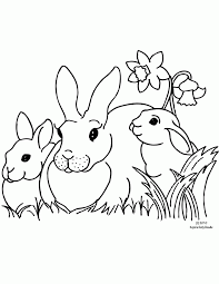 free printable coloring clipart bunnies daffodils