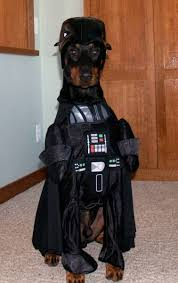 Halloween Costumes Darth Vader Darth Doberman Favorite Kind Dog Star Wars Costume