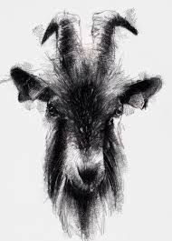 tattoo pen goats one of my sketch a day drawings goat cattle domestic drawing