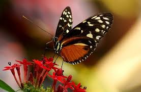 butterfly images pixabay free pictures