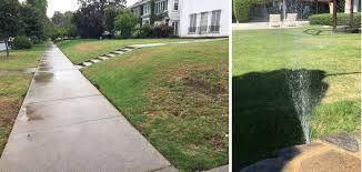 conscious landscaping goop